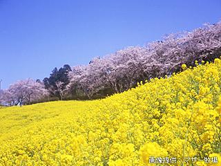 桜の次に行きたい!絶景の花畑スポット9♪関東編