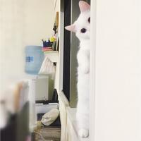 """インスタグラムはじめました。鈴木えみの愛猫""""ダニョ""""が可愛いすぎる♡"""