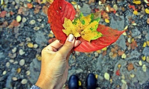〔京都〕 着物を着て、和に親しむ。はんなり紅葉を見に出かけよう