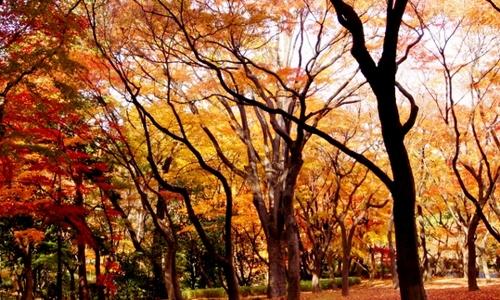 """""""超""""都心で感じる秋。東京ど真ん中で紅葉の絶景を楽しめる北の丸公園"""