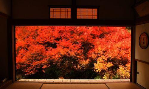 言葉を失うほど美しい。絵画のような安国寺の紅葉は知る人ぞ知る隠れ名所