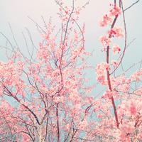 春と言えば桜*優雅に過ごせるおすすめお花見スポット5選【関東】