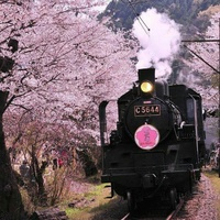 """【全国】桜前線移動中!""""乗物から""""いつもとは違ったお花見してみませんか?"""