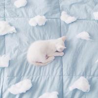 毎晩ダニとおやすみしてるかも。早い内から知りたい!寝具の基本のお手入れ